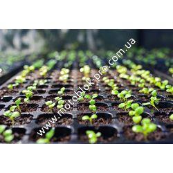 Выращивание рассады и выбор фитолампы