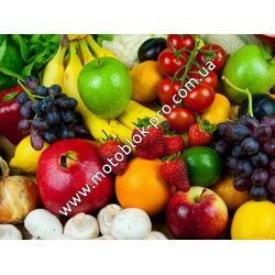 Современные возможности выращивания овощей и фруктов