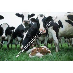 Условия содержания сельхоз животных