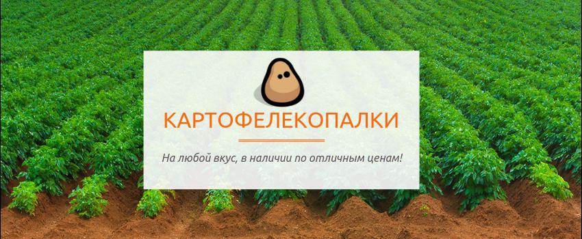Час копати картоплю!